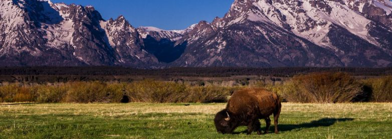 THE GREAT AMERICAN WEST NATIONAL PARKS YELLOWSTONE Aug 8-23, 2019